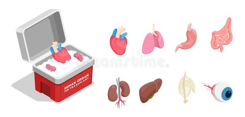 Isometrisk uppsättning för mänskliga organ stock illustrationer