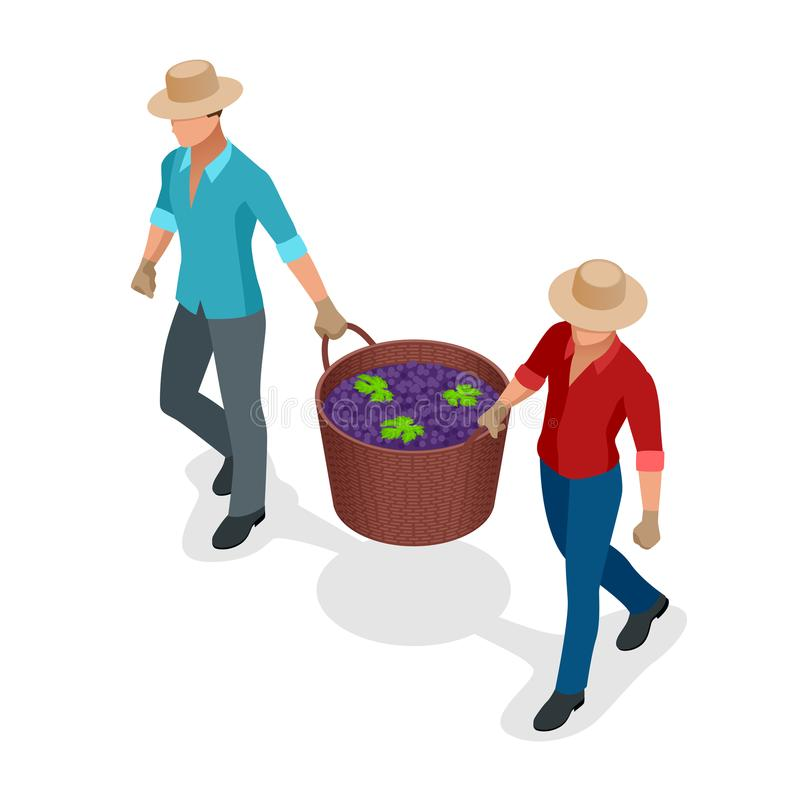 Isometriska arbetare som skördar druvor under druvorna för vin för vinskördblått i vide- korgar Isolerat objekt i lägenhet stock illustrationer