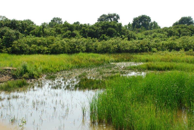 isonzo lub isonzo 7 przyrody rezerwata mokradła fotografia royalty free