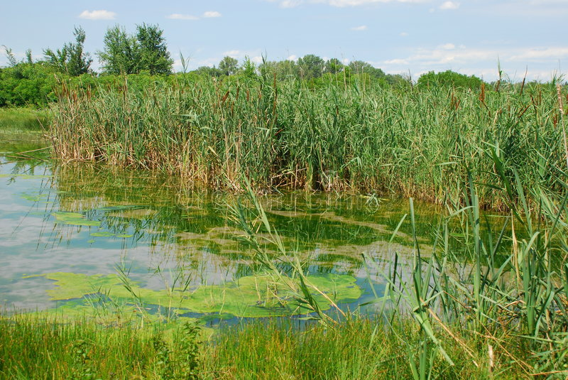 Isonzo Wetland Nature Reserve 9 Stock Photo