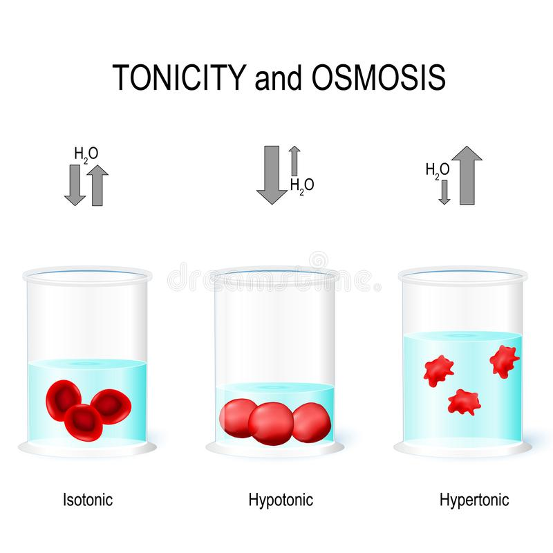 Free Isotonic, Hypotonic And Hypertonic Solutions Effects On Animal C Royalty Free Stock Photo - 133458515