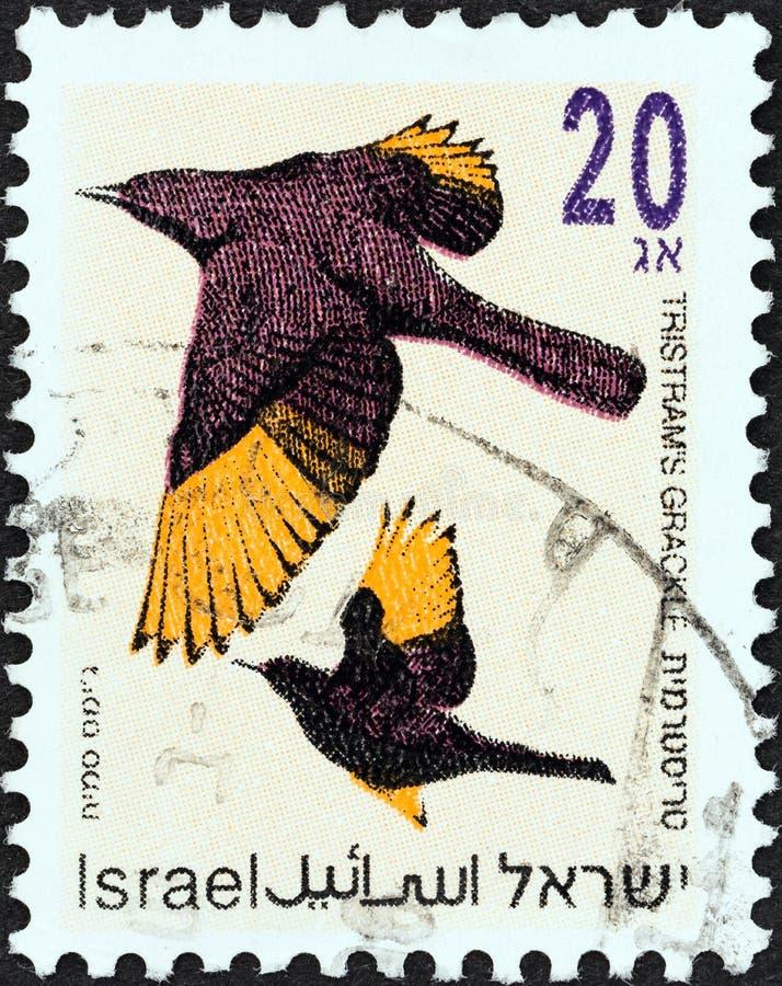 ISRAEL - CIRCA 1992: En stämpel som tryckts i Israel från utgivningen av 'Songbird' visar Tristram's grackle, runt 1992 royaltyfri fotografi