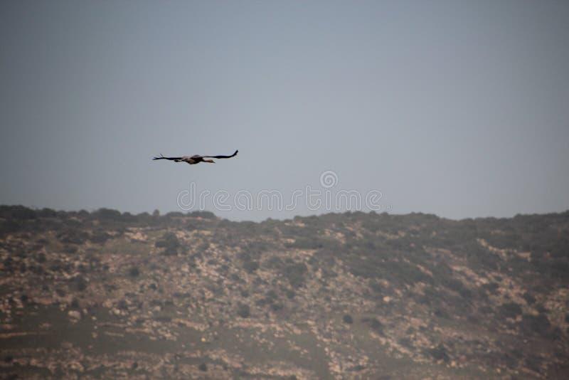 Israel Hula Valley royaltyfria bilder