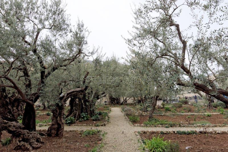 israel Jerusalem - Luty 15 2017 ogrodowy gethsemane Miejsce jezus chrystus ` s modlenie na nocy areszt zdjęcia royalty free