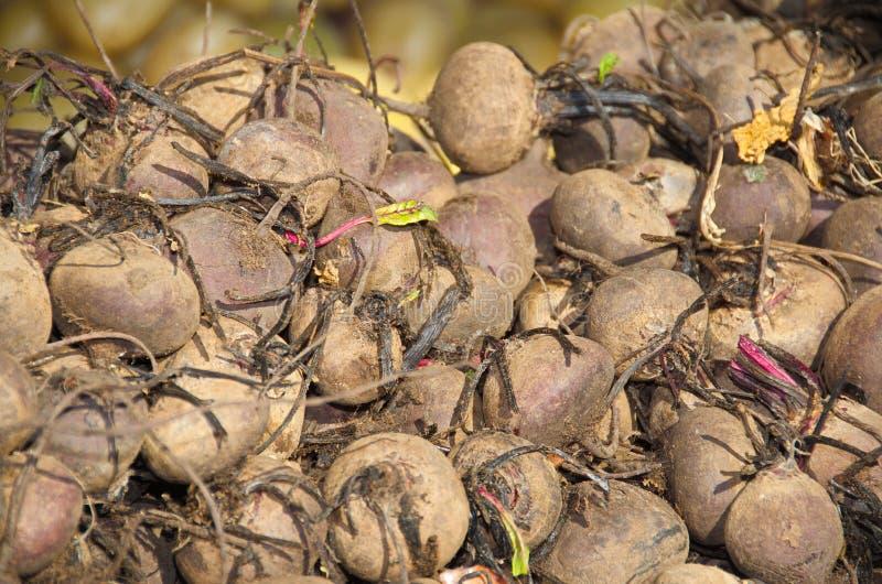 Israel market produce: beet roots royalty free stock photography