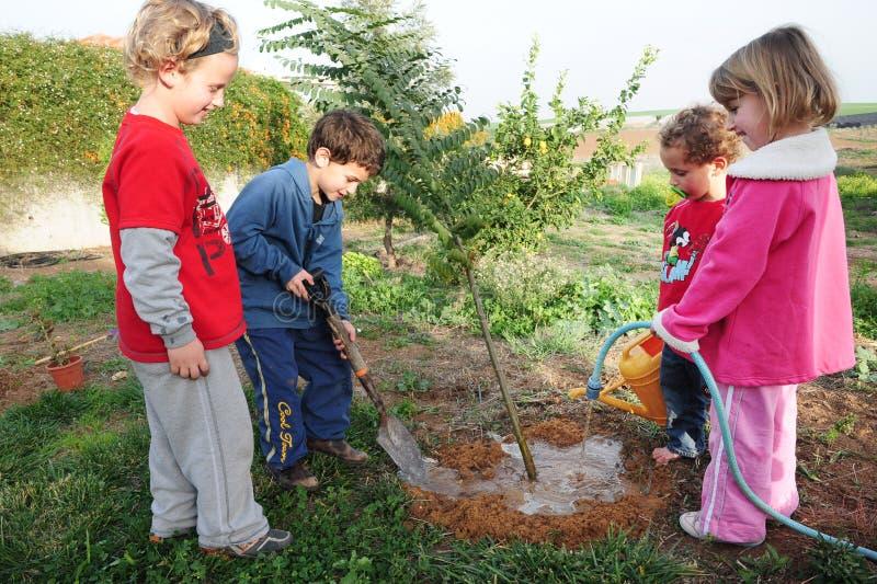 Israeli Children Celebrating Tu Bishvat Jewish Holiday Food. ASHKELON - FEB 09: Israeli children plant a new tree in the garden during the Jewish holiday of Tu stock photos
