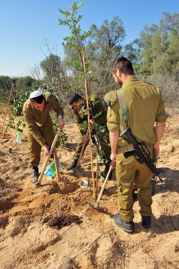 Israelis Celebrate The Jewish Holiday of Tu Bishvat. WESTERN NEGEV - JAN 20:Israeli soldiers plants tree in Tu Bishvat on January 20 2011 in the Western Negev stock image