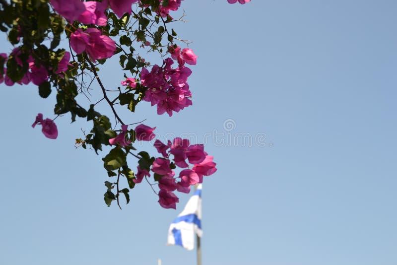 Israelisk nationsflagga som framme vinkar på monteringen av oliv i Jerusalem, Israel med färgrika trädsidor arkivfoto