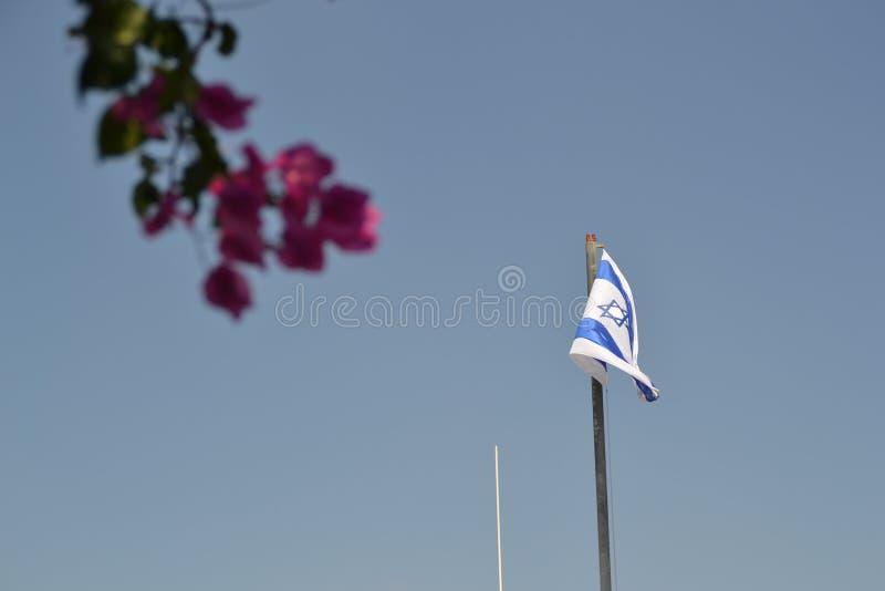 Israelisk nationsflagga som framme vinkar på monteringen av oliv i Jerusalem, Israel med färgrika trädsidor arkivbild