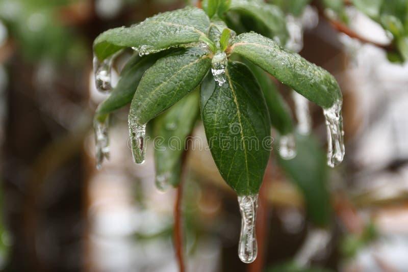 Isstorm i randen av våren royaltyfria bilder