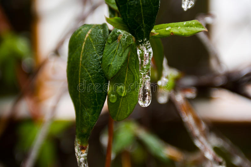 Isstorm i randen av våren royaltyfri bild