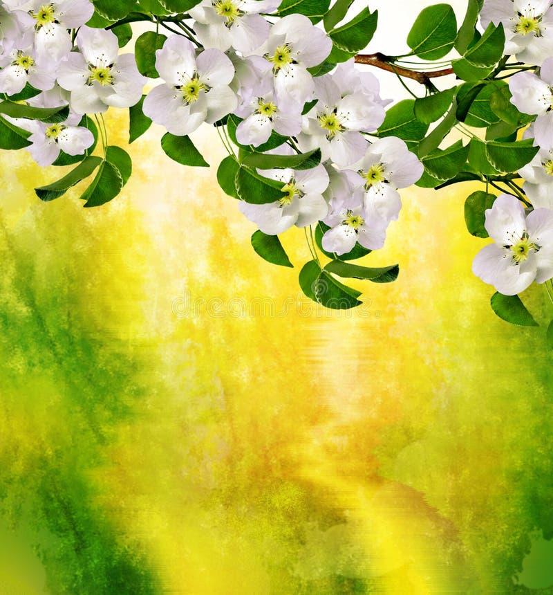 Ist ein grünes Feld voll der Weizenanlagen Blühende Birne lizenzfreies stockfoto