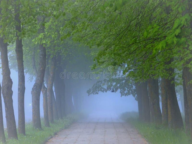 Ist ein grünes Feld voll der Weizenanlagen Nebelhafter Morgen in Litauen lizenzfreie stockbilder