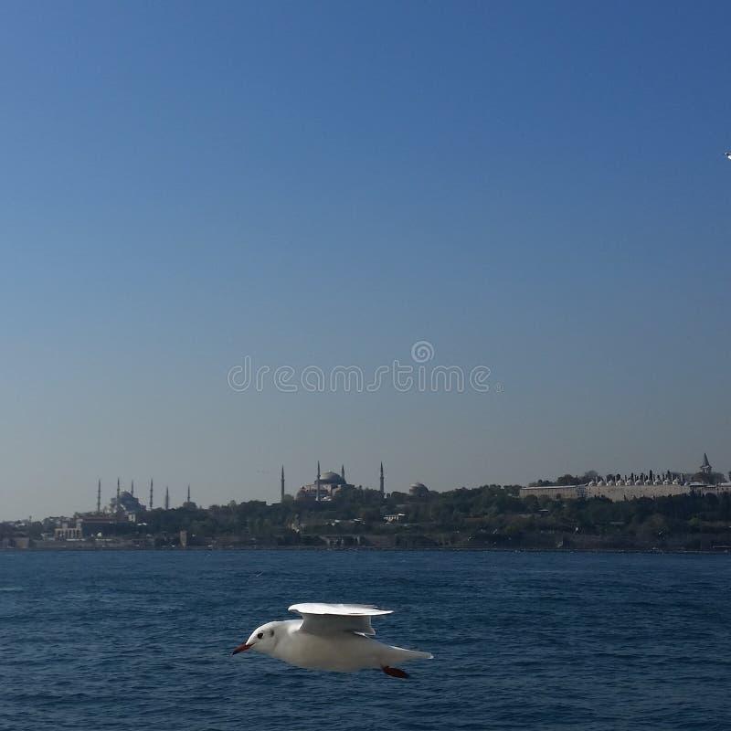 Istambul fotografia de stock royalty free