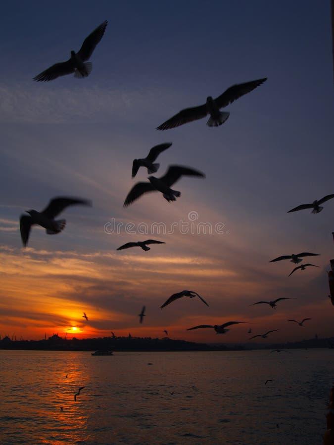 istanbul стоковое изображение rf
