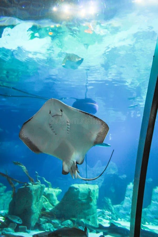 Istanbul Aquarium received visitors after restoration. TURKEY, ISTANBUL - JAN 11/2016: Istanbul Aquarium received visitors after restoration royalty free stock photo