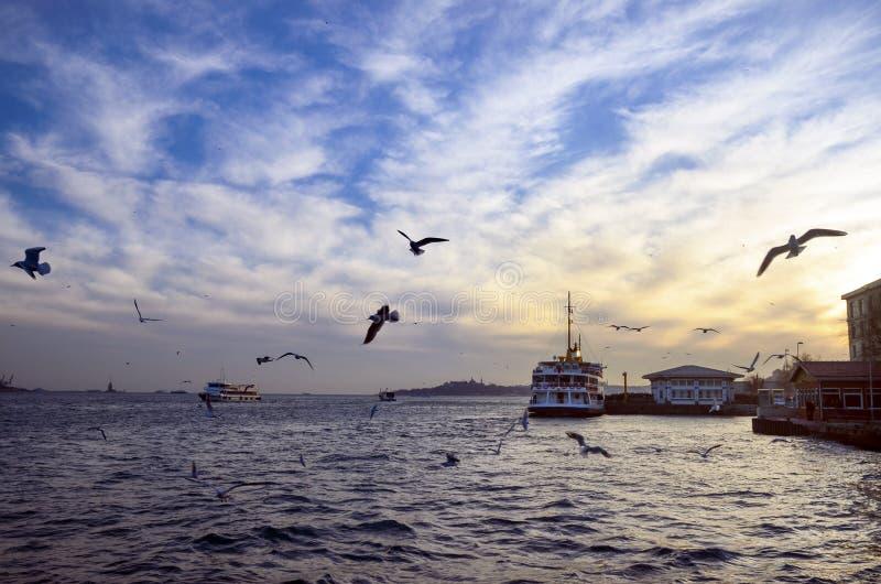 Istanbul Bosphorus afton, solnedgångseagulls och folk royaltyfria foton