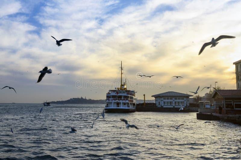 Istanbul Bosphorus afton, solnedgångseagulls och folk arkivfoton
