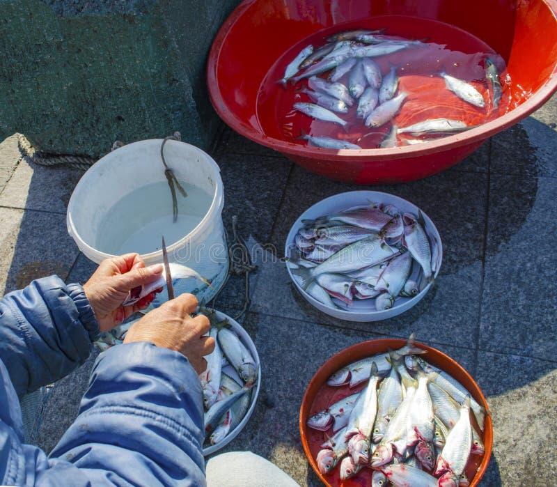 Istanbul bosphorus, fishing rod with the fish hunting. Turkey - Istanbul at the Bosphorus bonito, bluefish, mackerel, sardines, sea bass and other bottom fish stock photo