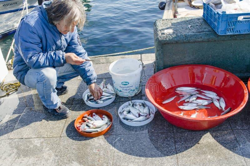 Istanbul bosphorus, fishing rod with the fish hunting. Istanbul, Turkey - March 18, 2013: Istanbul at the Bosphorus bonito, bluefish, mackerel, sardines, sea stock images