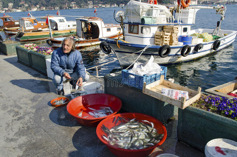 Istanbul bosphorus, fishing rod with the fish hunting. Istanbul, Turkey - March 18, 2013: Istanbul at the Bosphorus bonito, bluefish, mackerel, sardines, sea royalty free stock photography