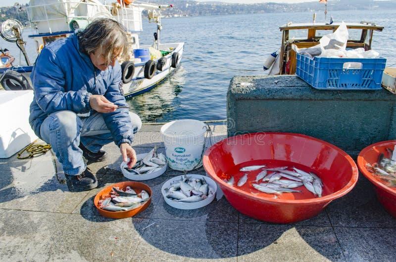 Istanbul bosphorus, fishing rod with the fish hunting. Istanbul, Turkey - March 18, 2013: Istanbul at the Bosphorus bonito, bluefish, mackerel, sardines, sea stock photo