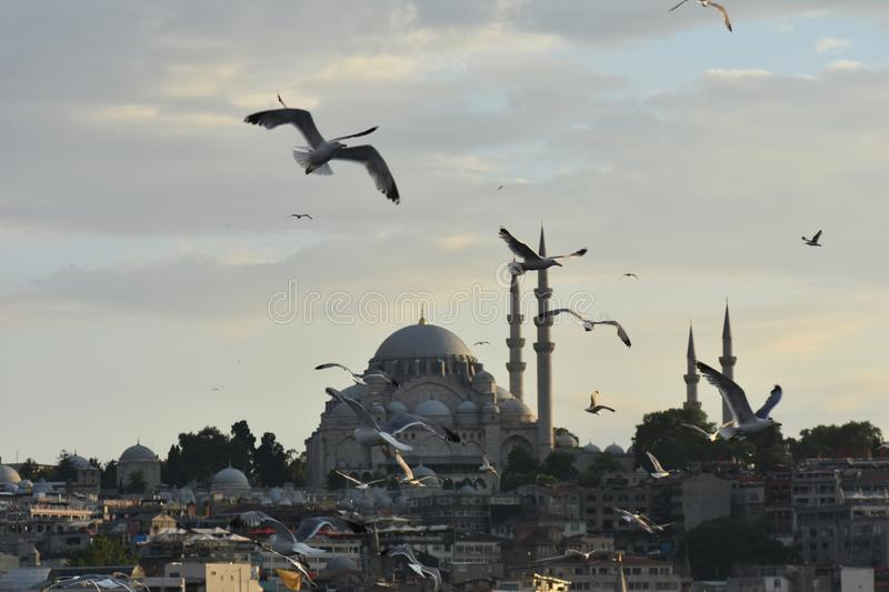 Istanbul the capital of Turkey, eastern tourist city. Beach scene cruise turkey tower mediaeval destination coast travel view turkish peninsula stock image