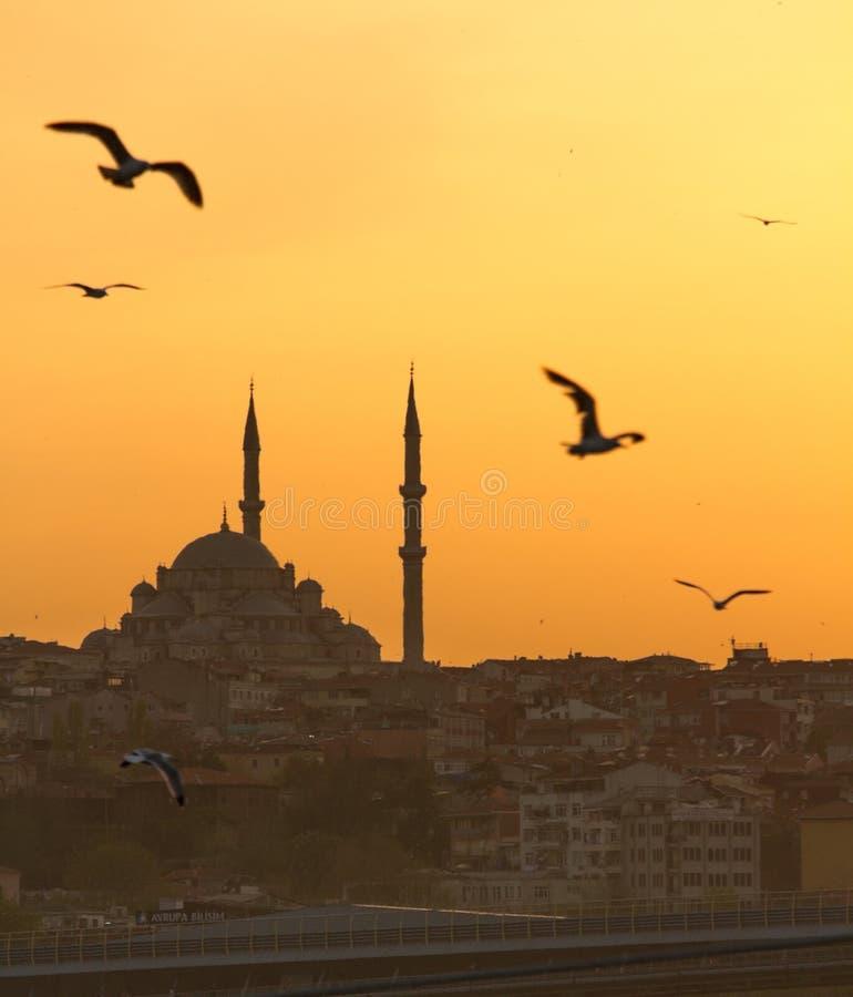 Istanbul, Moschee, Sonnenuntergang, Seemöwen stockfotos