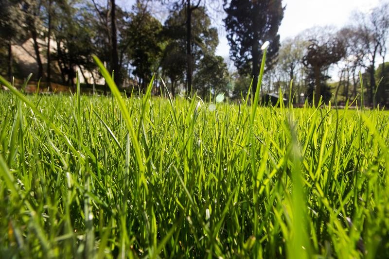 Spring Time for Istanbul April 2019, Grassy Field, Bright and Sunny Day. Trees royalty free stock image