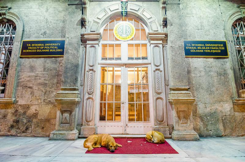 Istanbul Turkiet - Maj 26, 2017 Tillfällig hundkapplöpning som framme sover på röd matta av det Istanbul universitetet, fakultet  royaltyfri foto