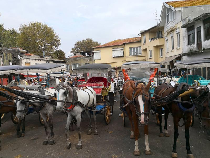 ISTANBUL TURKIET - Oktober 20, 2018 - häst som binds till en vagn i prinsessan Island Buyukada arkivbild