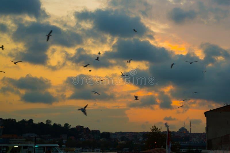 Istanbul, Turquie : Beaux oiseaux de ciel nocturne et de vol, mosquée dans la distance photographie stock libre de droits