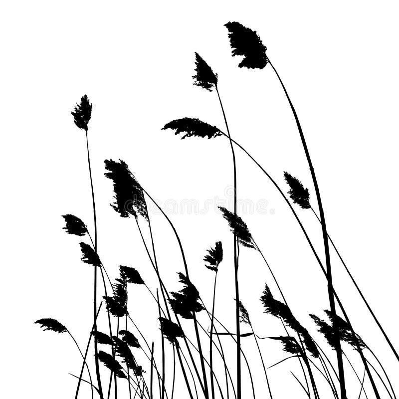 Istna trzcinowa sylwetka - wektorowa ilustracja ilustracja wektor