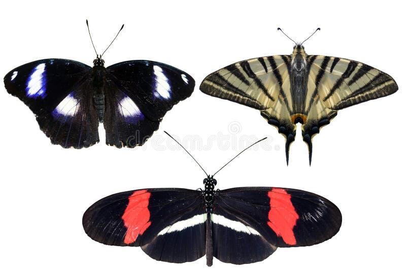 Istni motyle oddzielają na białym tle - set 04 fotografia royalty free