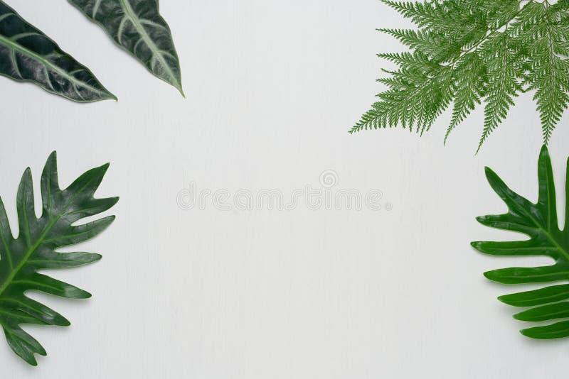 Istni tropikalni liście na białym drewnianym tle Botaniczni natur pojęcia Mieszkanie nieatutowy odgórny widok obrazy royalty free