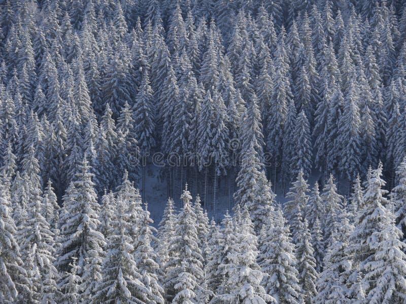 Istny Autentyczny zima krajobraz zdjęcia royalty free