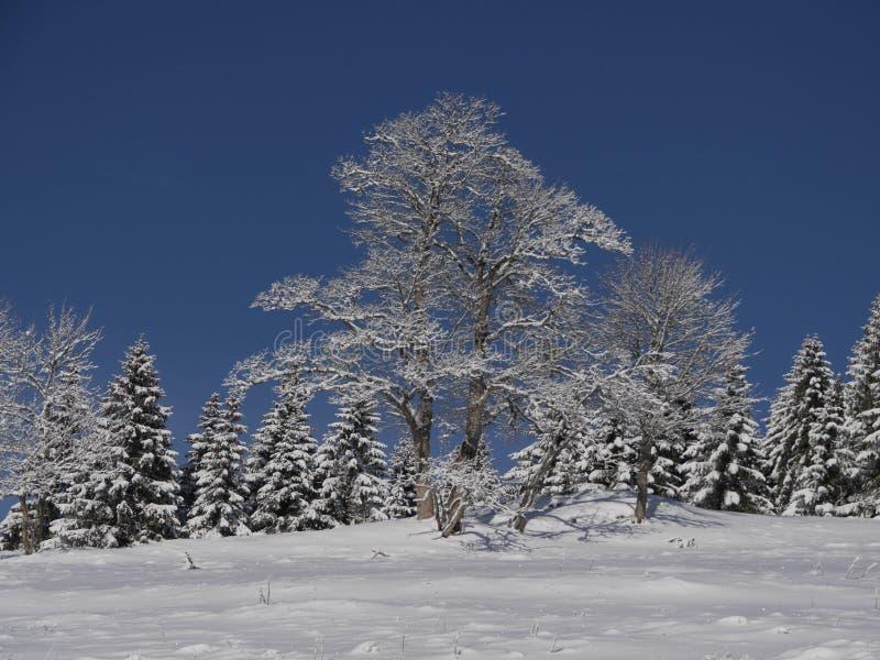 Istny Autentyczny zima krajobraz obraz royalty free