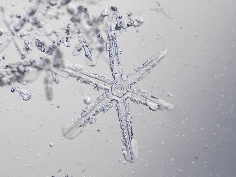 istny płatek śniegu obraz stock