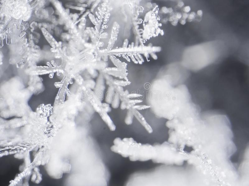 istny płatek śniegu obraz royalty free