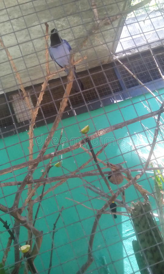 Istny ptak obrazy stock