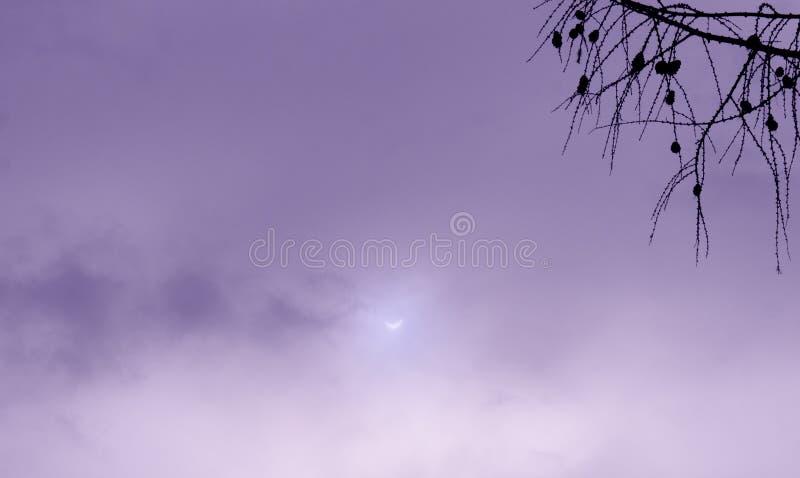 Istny Słonecznego zaćmienia fotografii fiołkowy niebo z gałąź obrazy stock