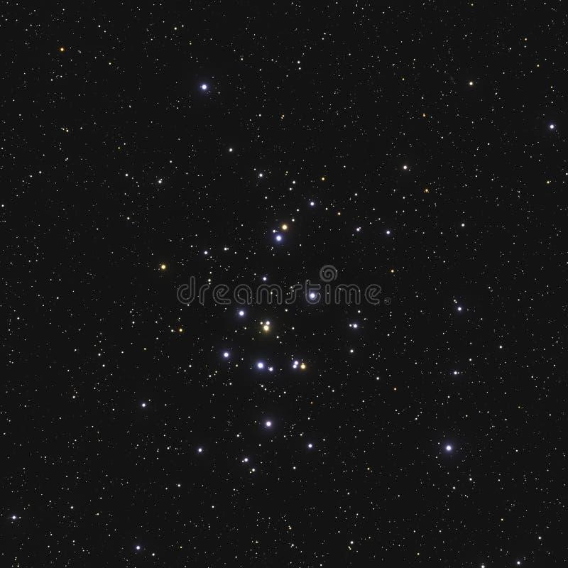 Istny wielki gwiazdowy grono M44 2632 lub NGC Ulowy grono w gwiazdozbioru nowotworze w Północnym niebie brać z CCD kamerą i fotografia stock