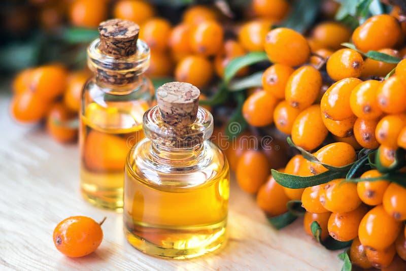 Istotny olej denny buckthorn Hippophae w szklanej butelce z świeżymi, soczystymi dojrzałymi żółtymi jagodami na gałąź z zielonymi zdjęcia stock