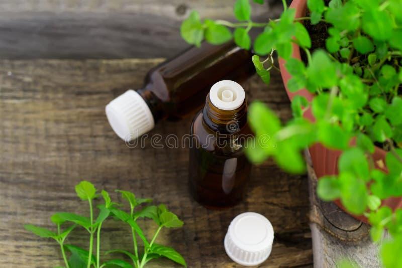 Istotny olej miętówka w małej butelce z świeżą mennicą, s obraz royalty free