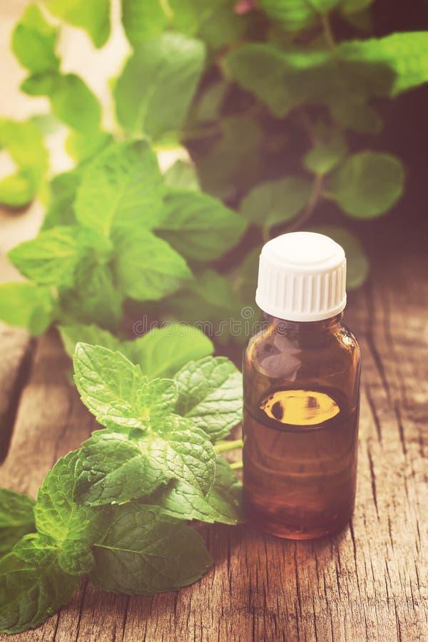 Istotny olej miętówka w małej butelce z świeżą mennicą, s obrazy stock