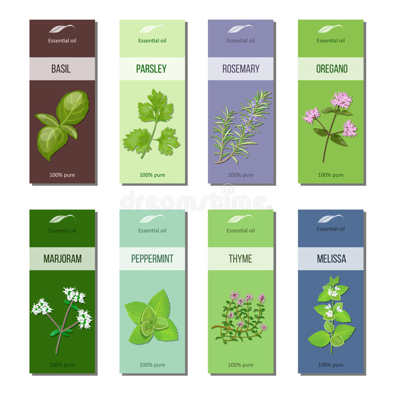 Istotny olej przylepia etykietkę kolekcję Basil, pietruszka, rozmaryn, oregano, lebiodka, miętówka, melissa, macierzanka lampasy ilustracja wektor