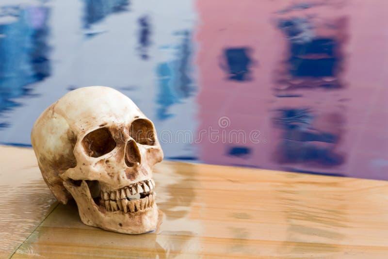 istoty ludzkiej boczny czaszki widok zdjęcie royalty free