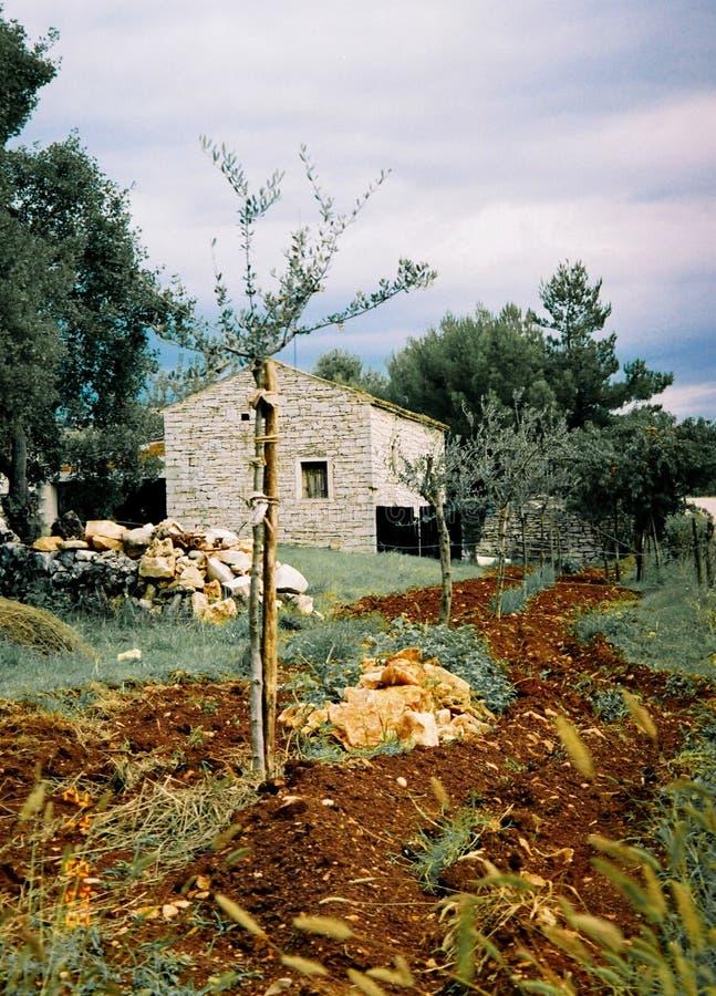 Istria, province de la Croatie photo libre de droits