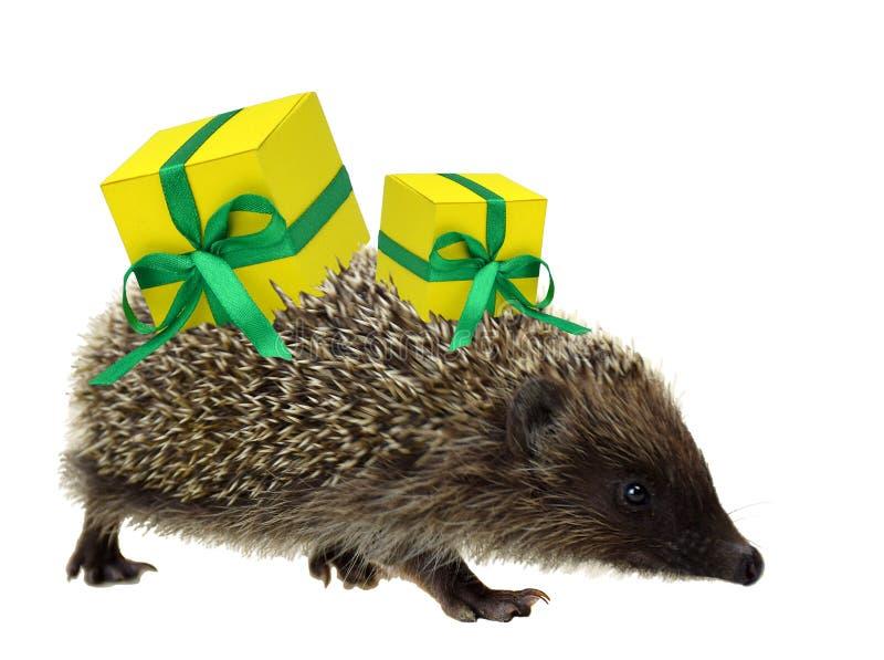 Istrice con i regali Natale Isolato Nuovo anno Vendita immagine stock