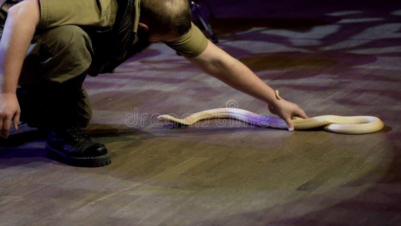 Istruttore che lavora con la cobra azione L'ammaliatore esegue in scena con la cobra pericolosa che lo dirige a mala pena pericol fotografia stock
